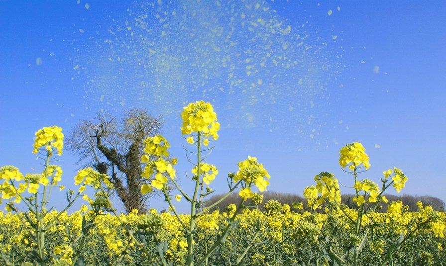 Come difendersi dalle allergie primaverili