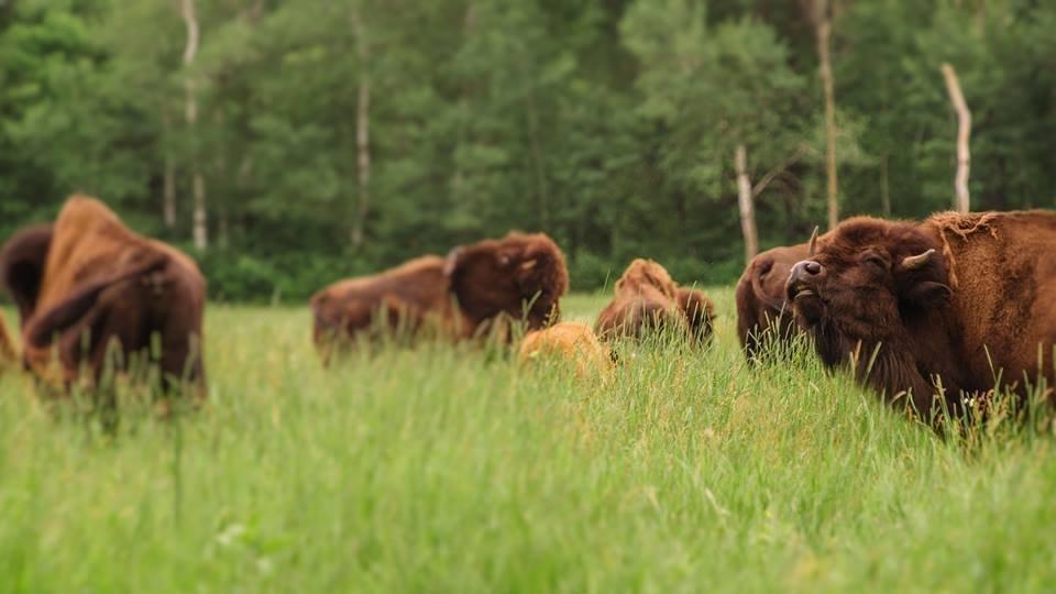 Carne Grass-fed: intervista ad Hans, presidente dell'AIAG